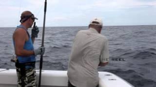 Sailfish on fly [VIDEO]