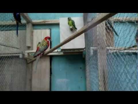 Criadero de aves la Cisterna Chile