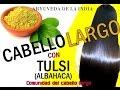 CABELLO LARGO Y EXTRA BRILLO CON TULSI (Albahaca) aryuveda de la India