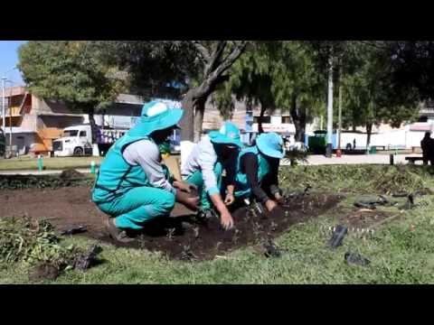 Realizan mantenimiento de rutina a la áreas verdes en el Distrito de Jesús Nazareno