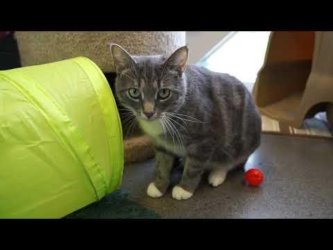 Video: WCJC Animal Shelter, September 28