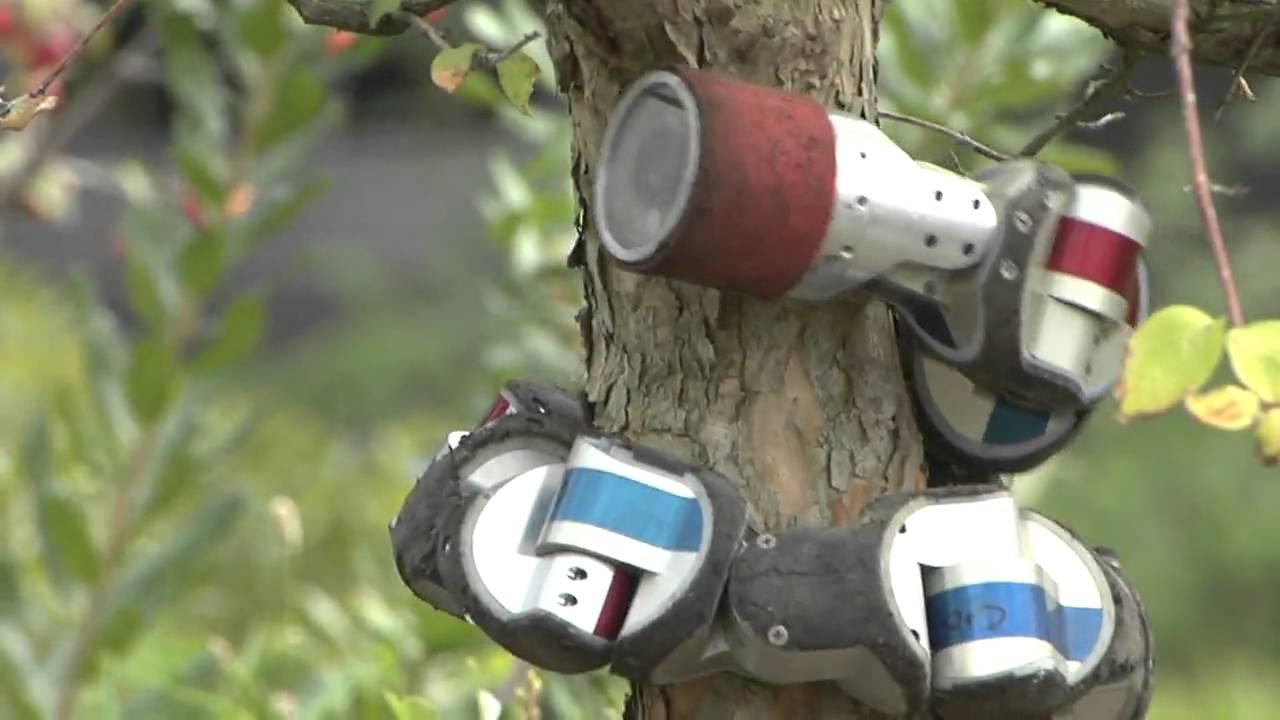 Robotický had umí i šplhat