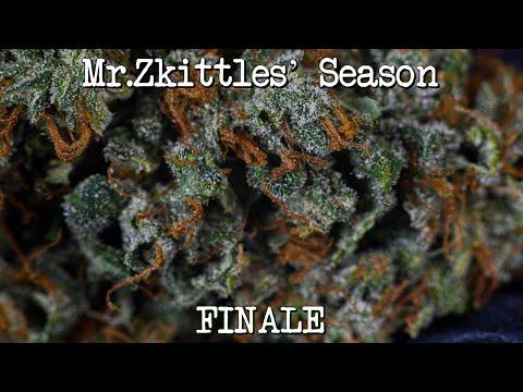 Mr.Zkittles' Season Finale (Dry Weight)