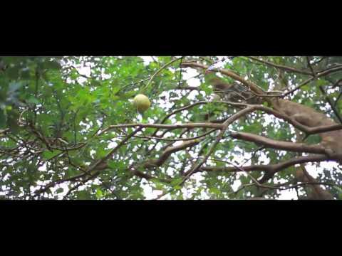 novormayude madhuram short film   Chirikkudukka1 short film