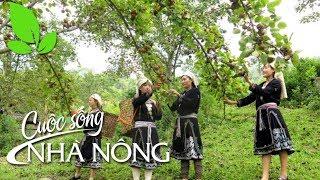 Cuộc sống người trồng hồng Xuân Vân - CSNN 327