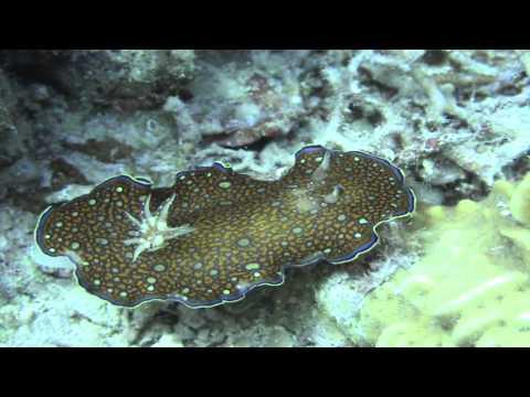 Ägypten: Hurghada - Rotes Meer - Ägypten / Meeres-Natur-Doku - Highlights Tauchen - Fische im Meer