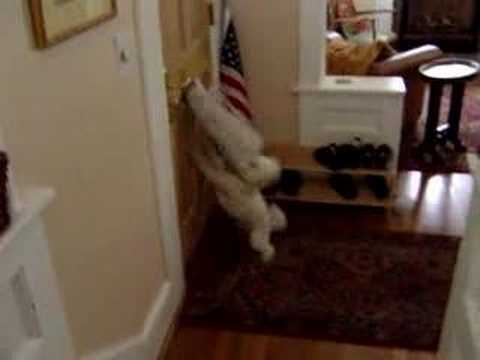 Tiny Dog Attacks Mailman Through Mail Slot