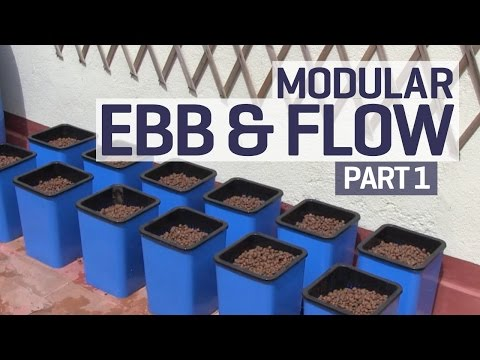 ebb - Here we set up a Flo n' Gro 12 pot modular flood and drain hydroponics system (manufactured by Titan Controls) on our outdoor terrace. We're growing Yolo Wonder sweet peppers in Gold Label...