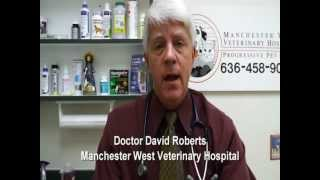 Pet Tips - Indoor Cat Vaccinations