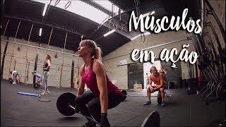 Músculos em ação