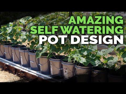 Best Self Watering Pot Design I've Seen Yet!