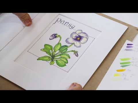 Drawing and Rendering Techniques of Flowers / Pansy 1 / Prof. Stephanie Sipp