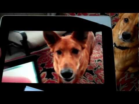 Classic Game Room - Happy New Year 2012! VIRAL DOG-CEPTION!!!!!