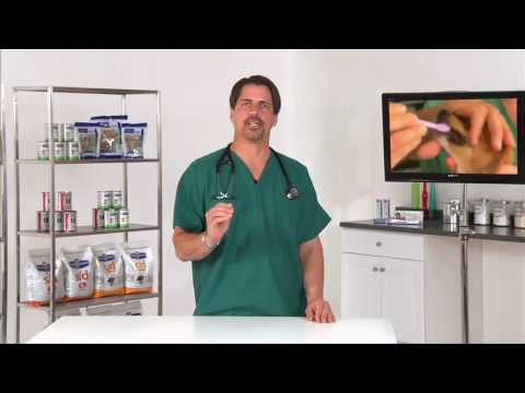 Canine Dental: Taking Care of Your Dog's Teeth - VetVid Episode 001