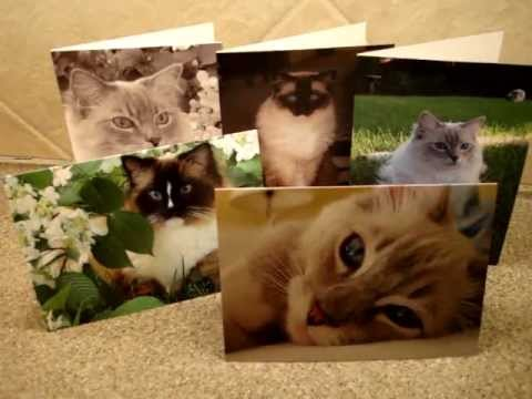 0 Ragdoll Cat Pictures Greeting Cards