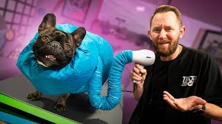 Video 10 Useless Products People Actually Use on Their Pets! MP3, 3GP, MP4, WEBM, AVI, FLV Juni 2019