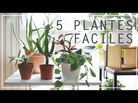 🌿 5 plantes d'intérieur faciles à entretenir