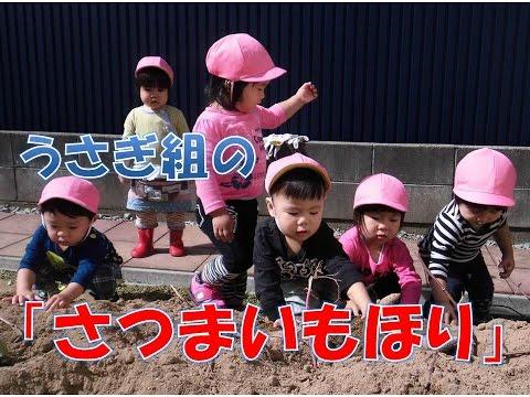 保育園(福井市)の1歳児がさつまいもほりを体験!園見学大歓迎!平成28年度の新入園申し込みは10/30まで
