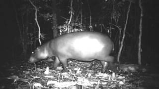 Biodiversity surveys from Fauna & Flora International's programme in Liberia produced a rare and unprecedented glimpse into the...