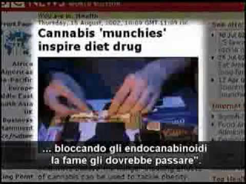 gli endocannabinoidi: la marijuana dentro di noi !!