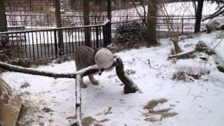 Зимние развлечения обитателей зоопарка Баттонвуд