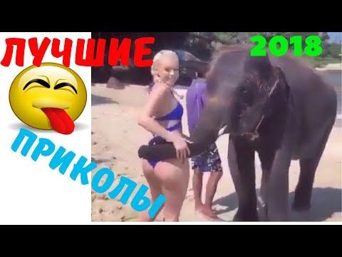 ВИДЕО ПРИКОЛЫ СЕНТЯБРЬ 2018  12 | Лучшие Смешные Подборки Видео Приколов