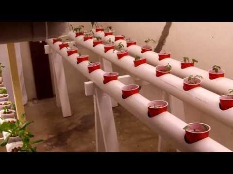 Basement hydroponics project