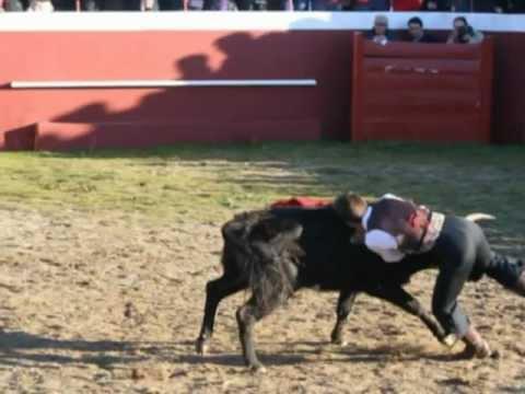 Bolsín Taurino Ciudad Rodrigo 2012- 22 ene. Campillo de Azaba
