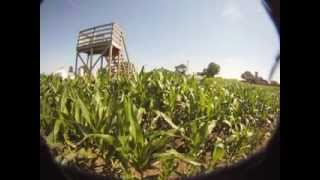 Heck of a Cornmaze growth timelapse RAW