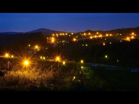 幻想的 ナシ園の防蛾灯