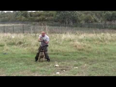 Military Police Dogs are Bad Asses