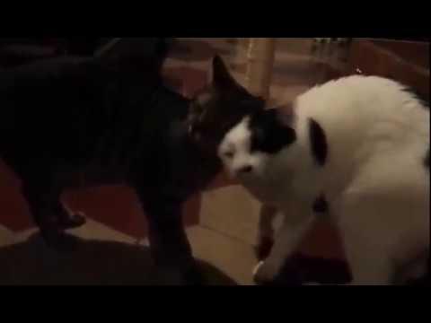 Adozione macchia e teo, adorabili gatti in adozione!