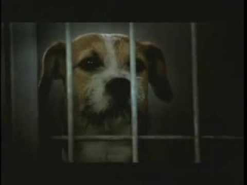 Saddest Dog Commercial Ever - Pedigree Adoption Drive