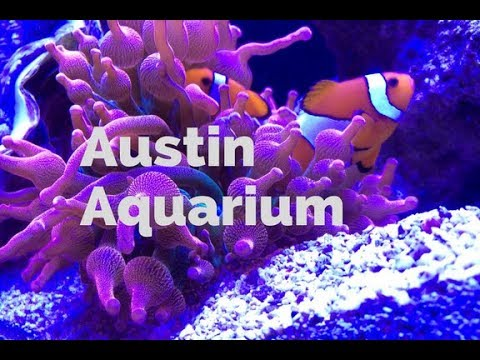 Things to Do in Austin with Kids: Austin Aquarium
