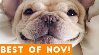 Video Funniest Pet Reactions & Bloopers of November 2017 | Funny Pet Videos MP3, 3GP, MP4, WEBM, AVI, FLV Januari 2019
