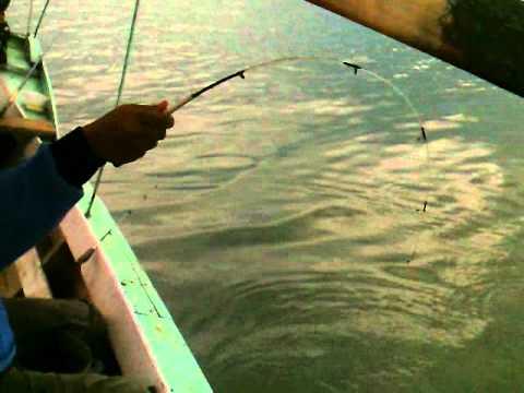 mancing ikan mas jatiluhur 3