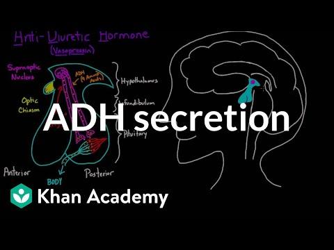 ADH secretion   Renal system physiology   NCLEX-RN   Khan Academy