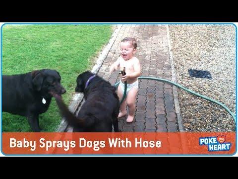Μωρά βρέχουν σκυλιά με το λάστιχο