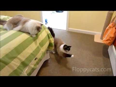 0 Top 15 Favorite Cat Products Reviewed in 2012