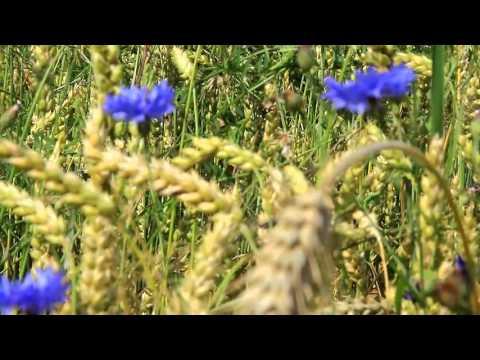 Красота природы Летний луг Цветы Релакс