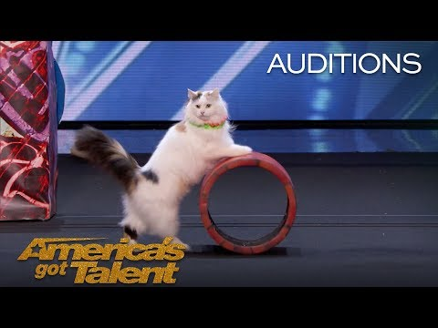 Watch This Spectacular Performance of Trained Cats