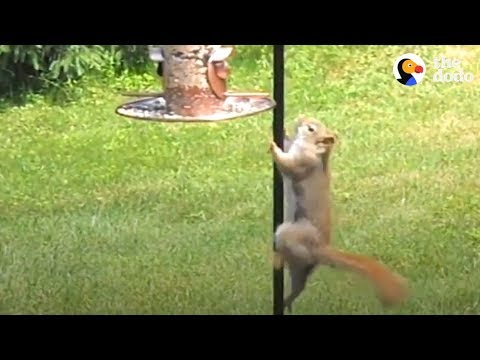Persistent Squirrel Won't Stop Until He Reaches Bird Feeder | The Dodo