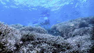 Nonton    Chasing Coral    Documents Destruction Of Coral Reefs Film Subtitle Indonesia Streaming Movie Download