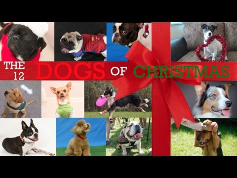 Days Of Christmas Song Dogs Barking