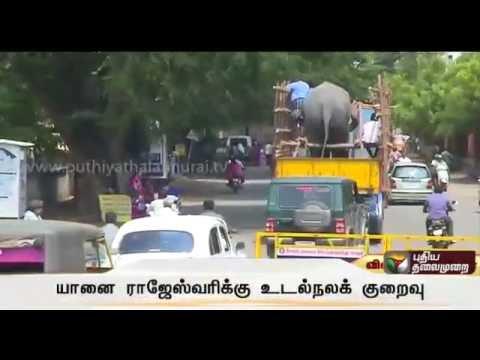 Salem-Sugavaneshwarar-temple-elephant-has-been-transferred-for-special-treatment