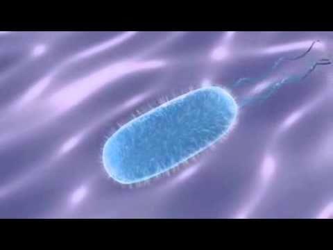 Vídeos Educativos.,Vídeos:Procariotas y Eucariotas