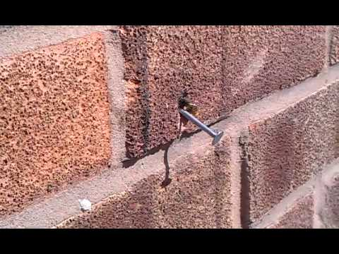 A Bee Pulls a Nail Out of a Brick Wall !