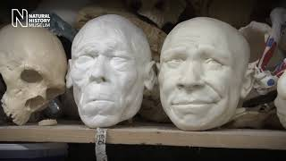 Bringing a Neanderthal to life: the making of our model