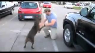 Cão revê dono e fica descontrolado de alegria