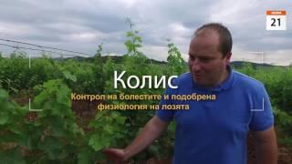 БАСФ: Технологии в лозяLink to: http://www.agro.basf.bg//